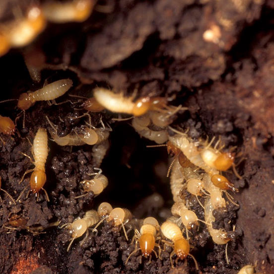 termite control services gga pest management