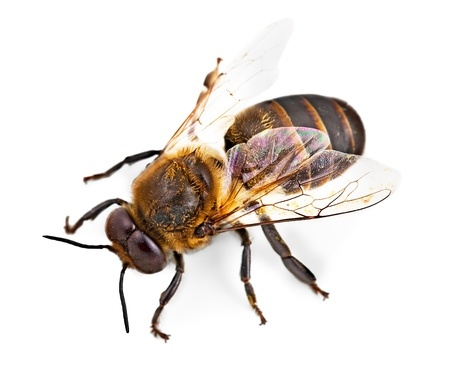 Bee Removal Texas