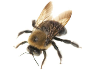 Bee Removal Waco