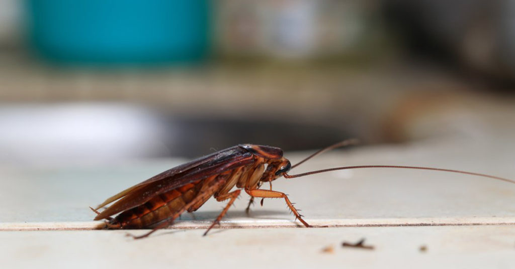 most common household bugs gga pest management