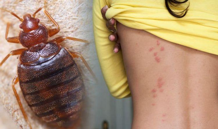bed bug control gga pest management