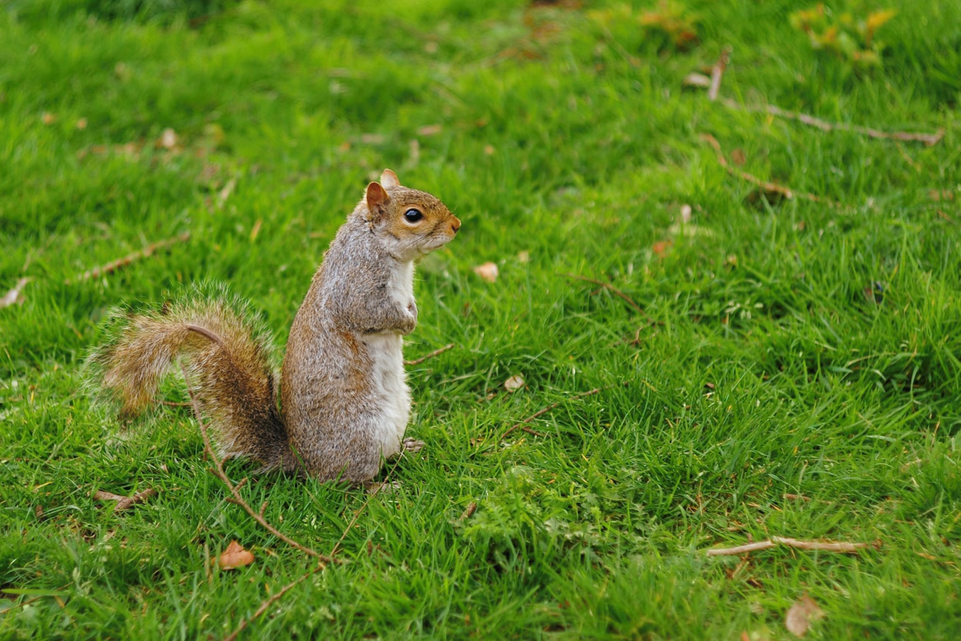 squirrel animal control central-texas gga pest management