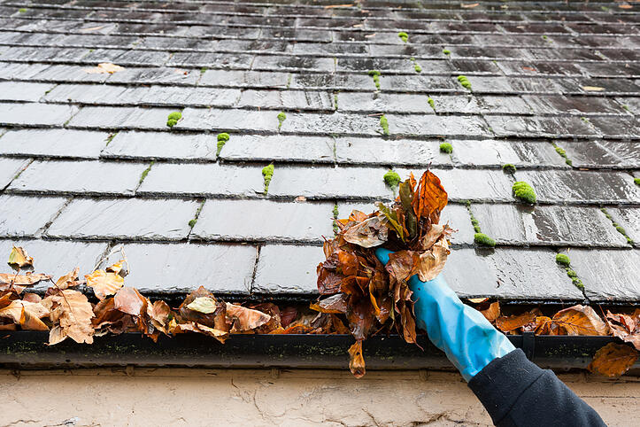 gutter protection pest control