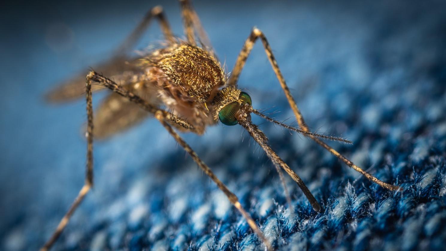 mosquito control pest management