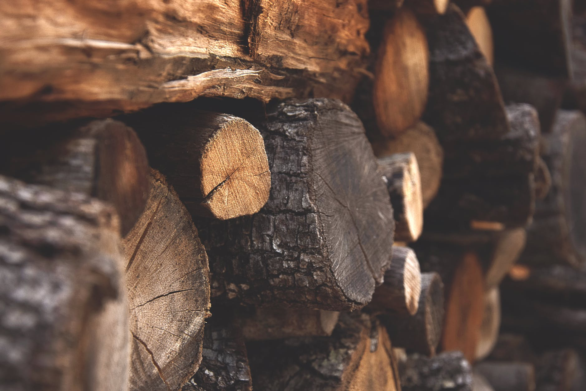 store firewood to avoid pests gga pest management