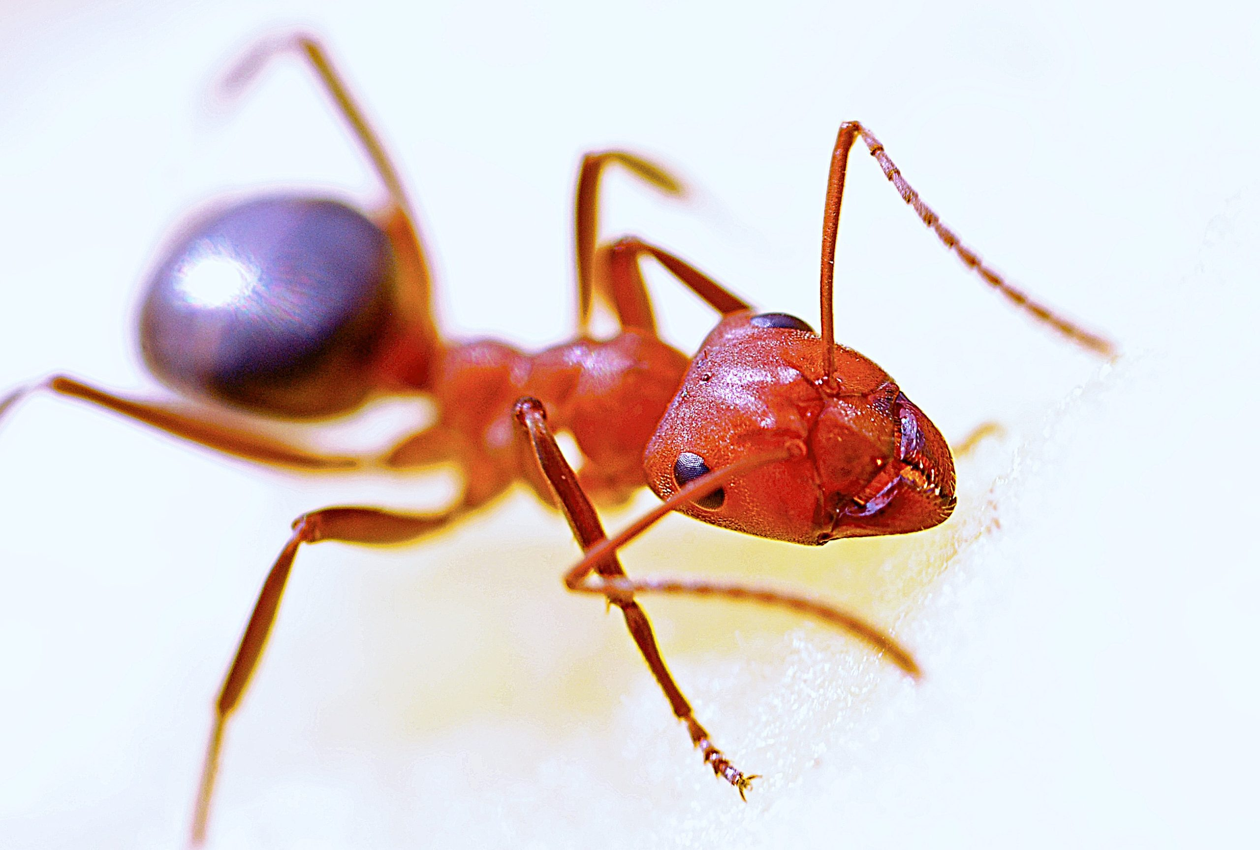 fire ants ant control in texas